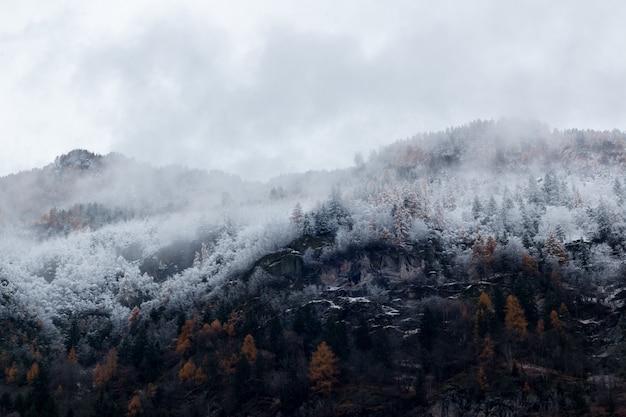Montanha cercada por árvores com neve