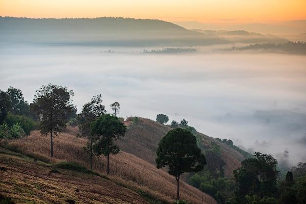 Montanha coberta de névoa ao amanhecer