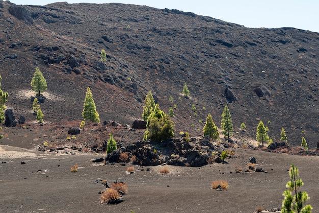 Montanha com árvores solitárias