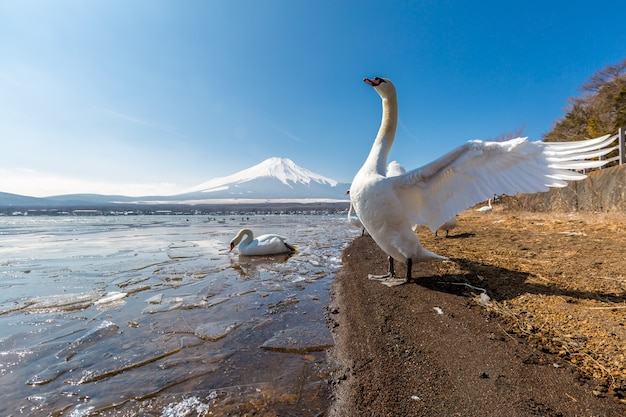 Montanha fuji yamanaka e ganso