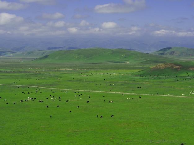 Montanha grande grama