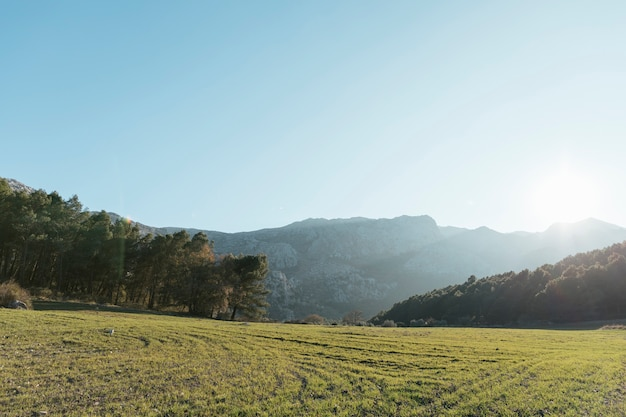 Montanha pedregosa com paisagem de árvores na luz solar