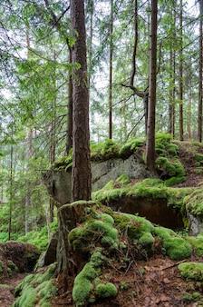 Montanha velha, floresta rochosa e úmida dos cárpatos com musgo
