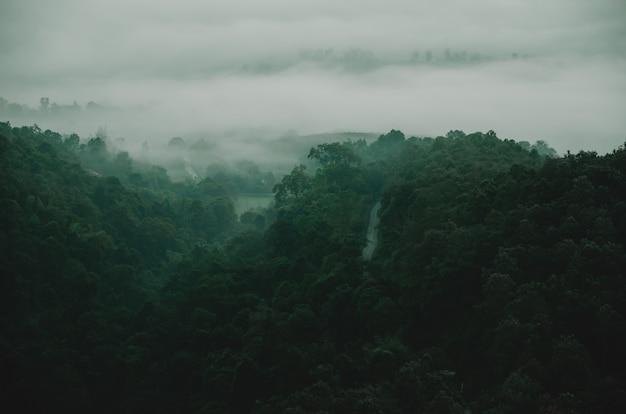 Montanha verde, com, árvore, em, escuro, luz