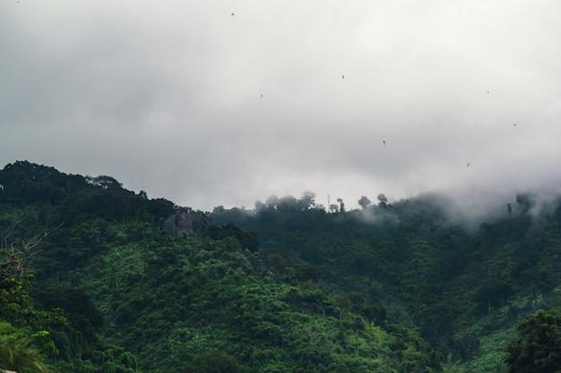 Montanha verde na nuvem e nevoeiro