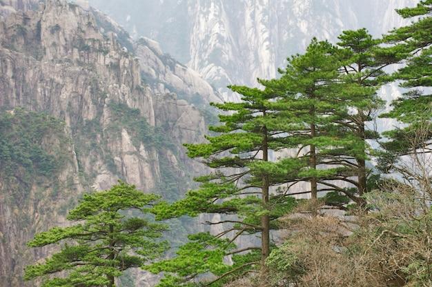 Montanhas amarelas de huangshan, rochas e pinheiros.