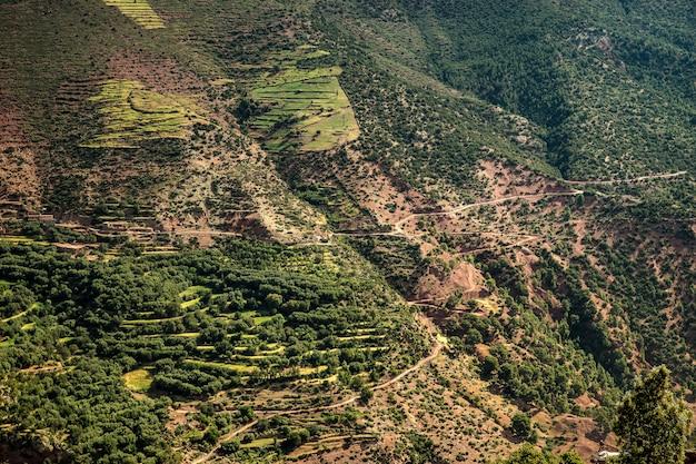 Montanhas cobertas de árvores e vegetação