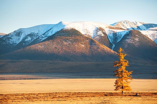 Montanhas cobertas de neve e árvore amarela do outono. vista do cume do norte-chuya em altai, sibéria, rússia