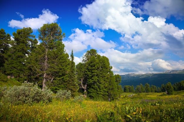 Montanhas com floresta de cedro