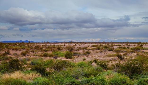 Montanhas com paisagem coberta de cacto saguaro