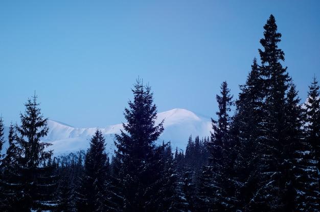Montanhas de inverno e abetos acima das nuvens ao nascer do sol