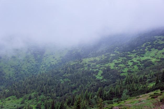 Montanhas dos cárpatos no meio do nevoeiro com pinheiros verdes