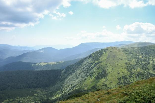 Montanhas dos cárpatos, topos de montanhas verdes e floridas. céu claro com sol e nuvens brancas.