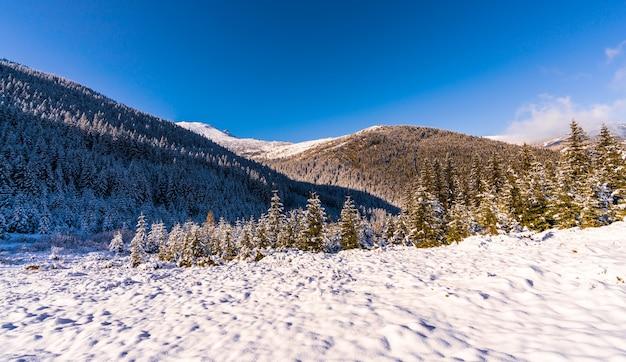Montanhas e colinas cobertas de neve dos cárpatos com enormes montes de neve branca e árvores de natal perenes
