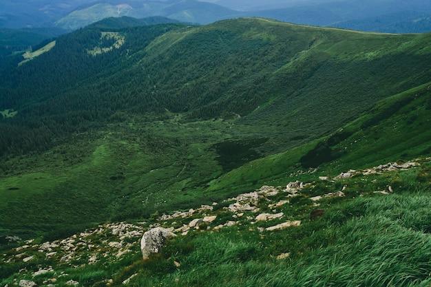 Montanhas e planícies com grama exuberante e pedras. floresta de montanha no nevoeiro de nuvens. paisagem da floresta de montanha.