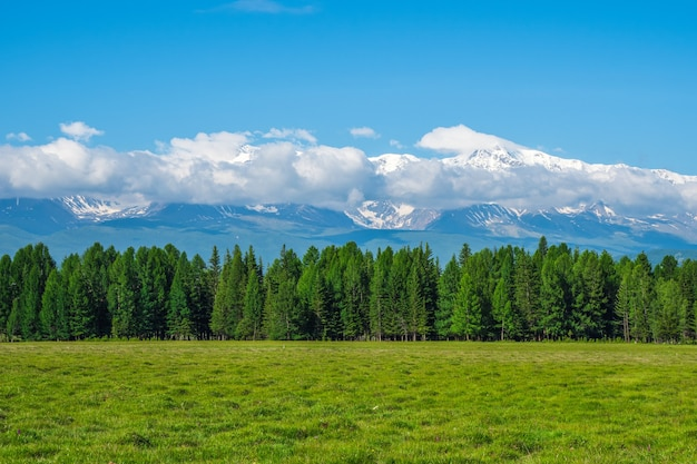 Montanhas gigantes com neve acima da floresta verde em dia ensolarado. geleira sob o céu azul. incrível paisagem de montanhas nevadas da natureza majestosa.
