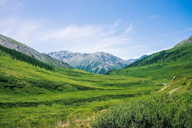 Montanhas gigantes com neve acima do vale verde com prados e florestas em dia ensolarado. rica vegetação de terras altas sob a luz do sol.
