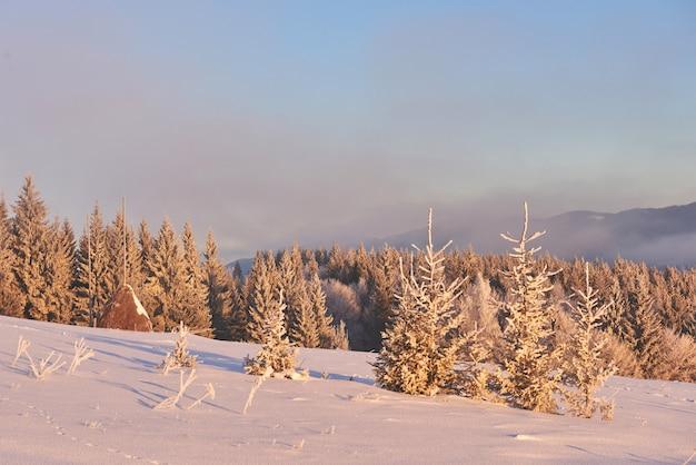 Montanhas majestosas da paisagem misteriosa do inverno no inverno. árvore coberta de neve do inverno mágico. cárpatos. ucrânia