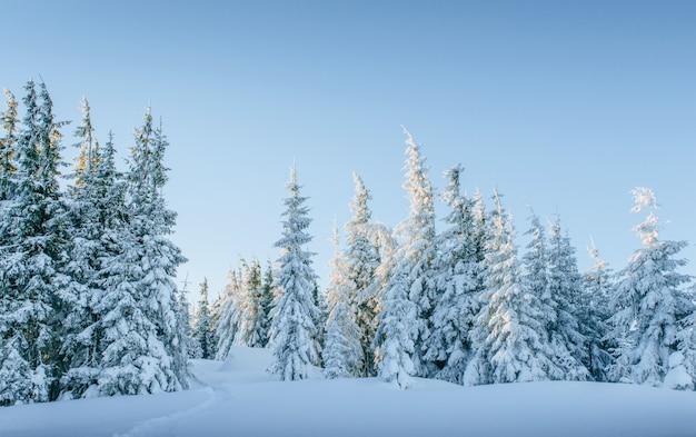 Montanhas majestosas da paisagem misteriosa do inverno no inverno. árvore coberta de neve do inverno mágico.