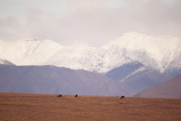 Montanhas nevadas nos portões do parque nacional do ártico