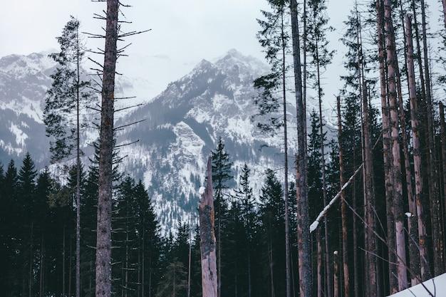 Montanhas tatra, polônia, eslováquia. turismo de férias na estação de esqui. caminhadas em uma bela paisagem.