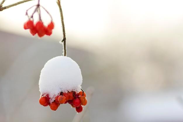 Monte congelado seco de bagas vermelhas maduras brilhantes