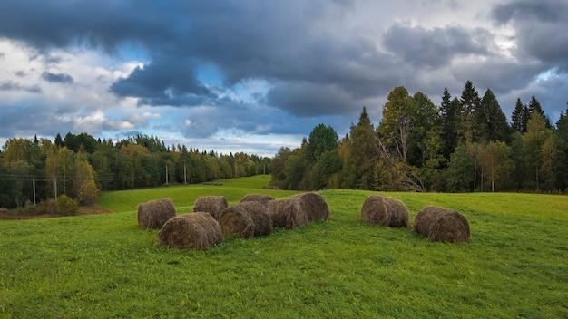 Monte de feno em um campo perto da floresta no outono