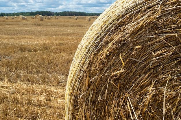 Monte de feno no campo, visão de close-up. montes de feno amarelos e dourados brilhantes em campos agrícolas em um dia ensolarado de verão.