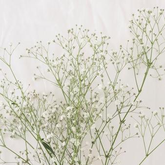 Monte de galhos de plantas verdes finas com flores