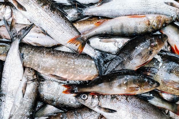 Monte de peixes do rio