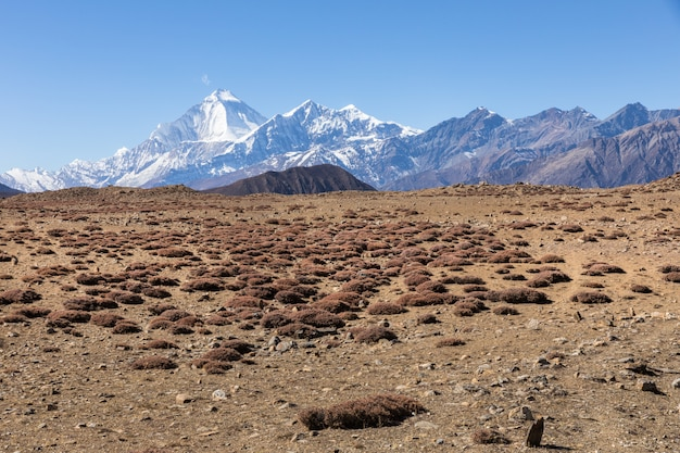 Monte dhaulagiri e pico de tukuche