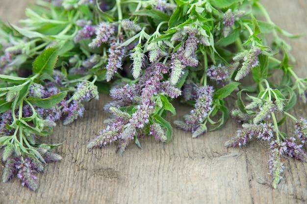 Monte ervas florescendo hortelã-pimenta. ervas medicinais. estilo de país rural vintage.