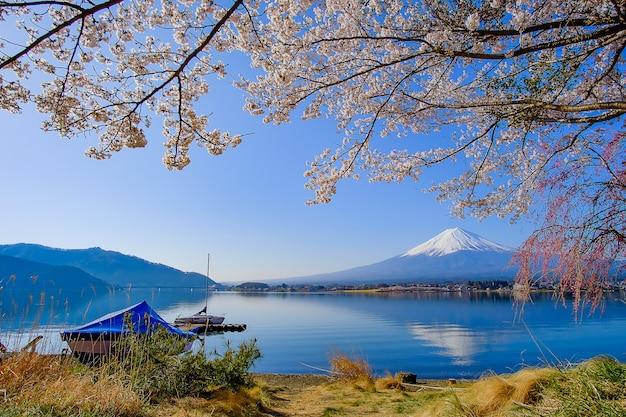 Monte fuji, com, neve tampada, céu azul, e, bonito, flor cereja
