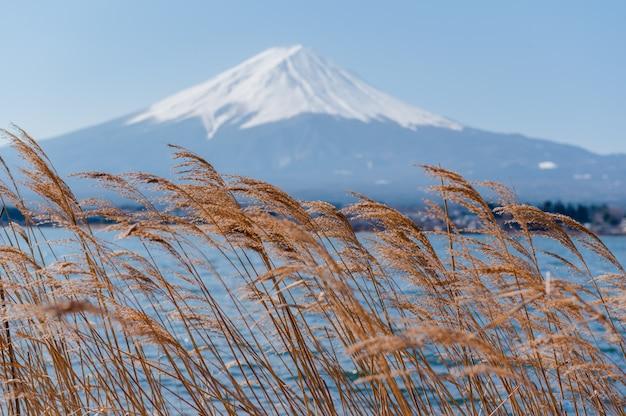 Monte fuji com vista para a flor
