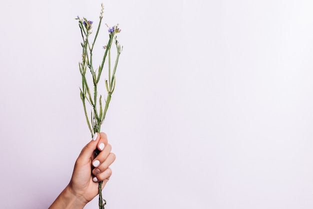 Monte seco de hastes sem flores em uma mão feminina com uma manicure em um fundo claro