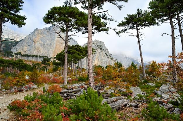 Monte shaan-kaya, a cidade de alupka, na crimeia.