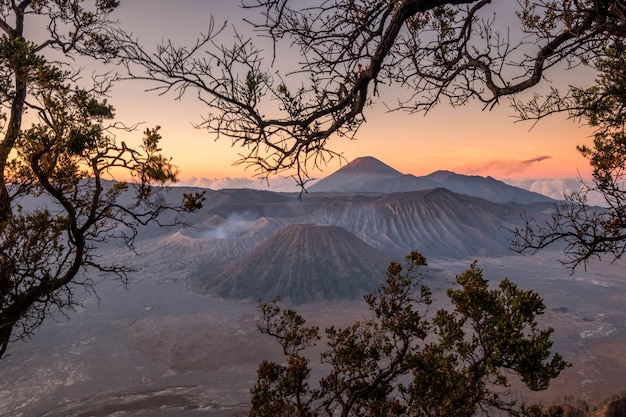 Monte, vulcão, um, ativo, com, armação árvore, em, amanhecer
