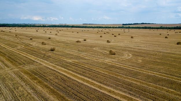 Montes de feno amarelos redondos estão espalhados de forma caótica pelo campo