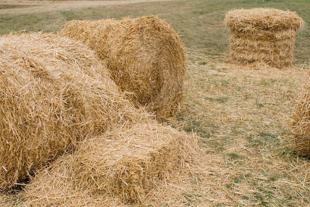 Montes de feno em um campo em um prado no verão