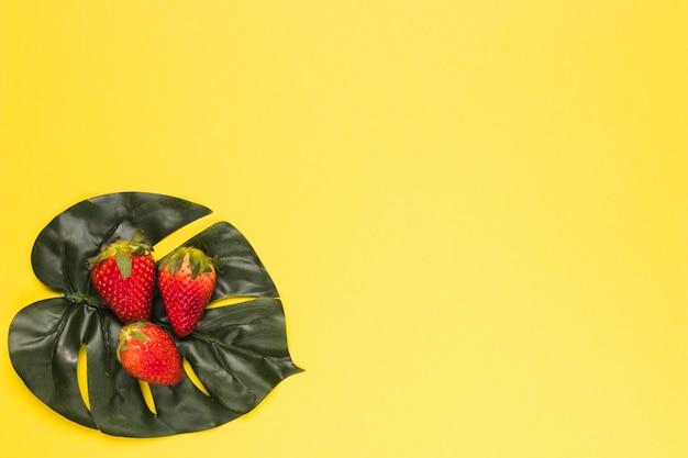 Morango vermelho maduro na folha de monstera