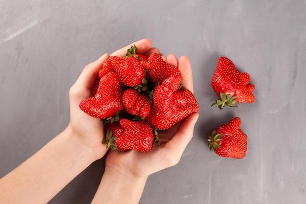 Morangos orgânicos incomuns em mãos femininas. frutas feias na moda.