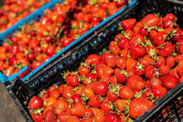 Morangos saborosos, maduros e vermelhos são vendidos no mercado. em caixas de plástico. bazar. verão