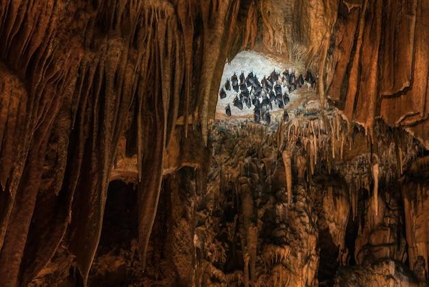 Morcegos se entregando de cabeça para baixo em formações de caverna com estalagmites e estalactites no subsolo
