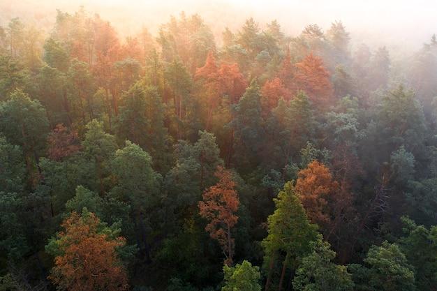 Morrendo de floresta de montanha na névoa da manhã.