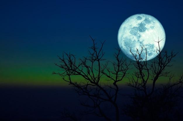 Morrendo de grama lua cheia e árvores secas de silhueta no céu azul verde escuro do sol.