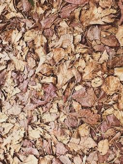 Morrendo folha no chão.