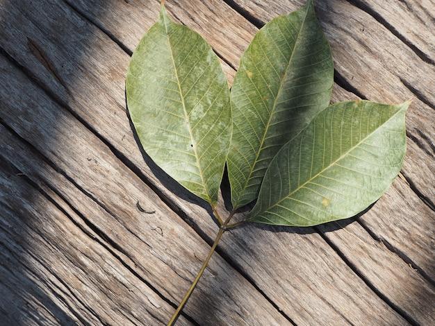 Morreu a folha no log de árvore morreu com a luz brilhando para o fundo natural
