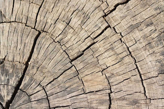 Morreu fundo de textura de madeira