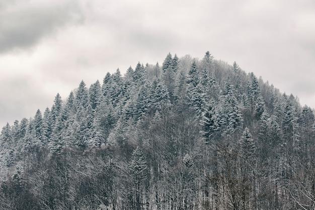 Morro com uma floresta coberta de neve. paisagem de inverno
