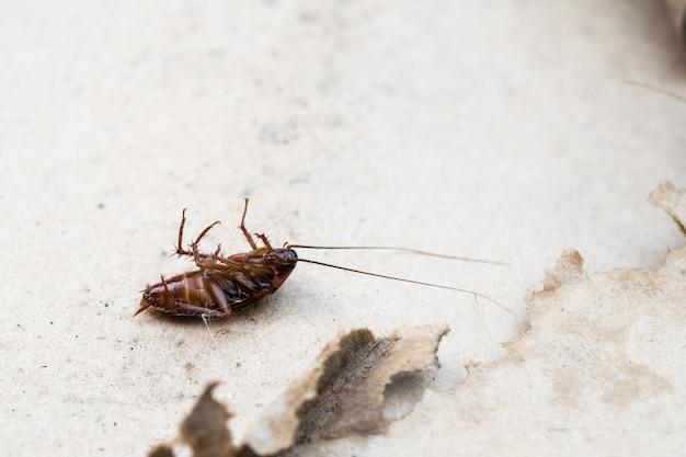Morte de barata no chão